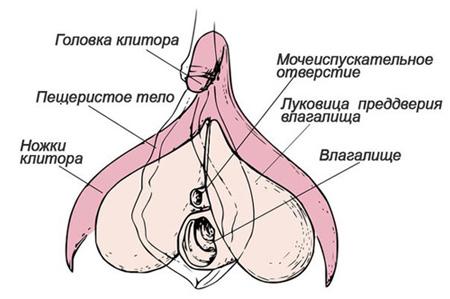 Виды оргазма женщины